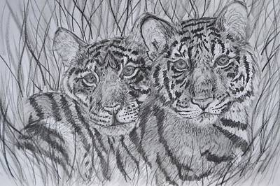 Animals Drawings - Tiger Cubs by Kylie Jo Greshik