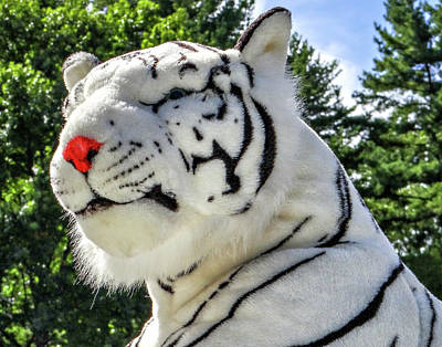 Photograph - White Tiger by Dennis Dugan