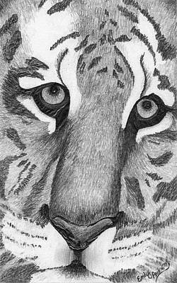 Animals Drawings - Tiger by Emily Boehm