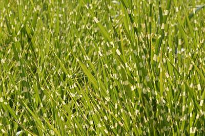 Photograph - Tiger Grass #1 by Photography by Tiwago