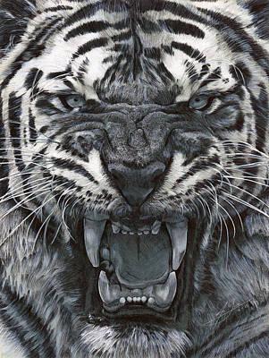Tiger Growl Original