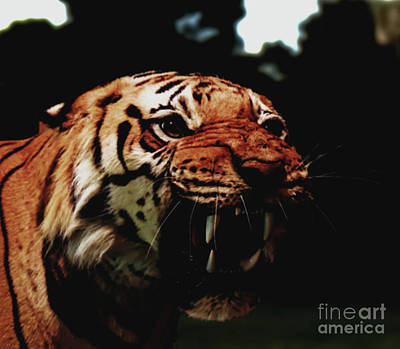 Ethereal - Tiger Growling by JB Thomas
