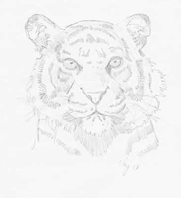 Tiger Head Drawing Original