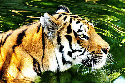 The Tiger Hunt Photograph - Tiger Hunting by Marco Gallarino