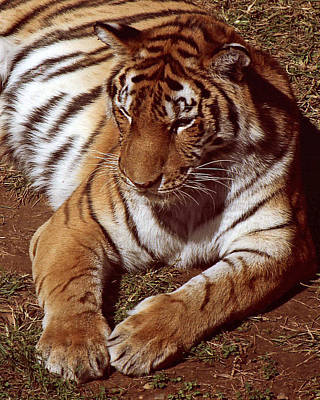 Nature Photograph - Tiger I by Gary Adkins
