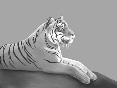 Pastel - Tiger II by Elizabeth Lock
