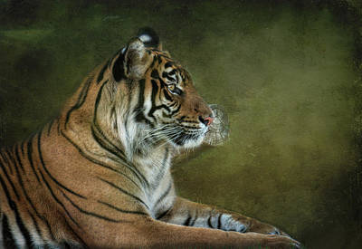 Photograph - Tiger In Crisis  by Saija  Lehtonen