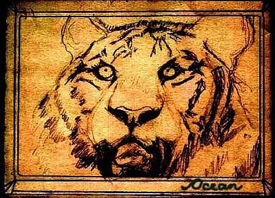 Drawing - Tiger In Golden Tones And Sepia by Ocean