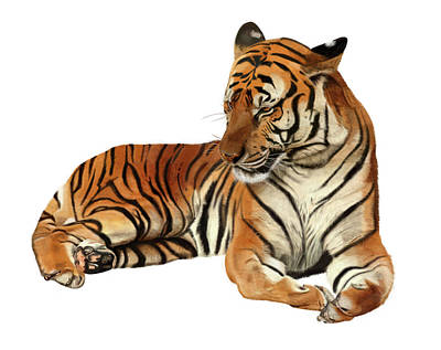 Digital Art - Tiger In Repose by Nigel Follett