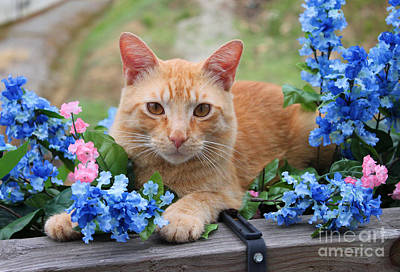 Photograph - Tiger In The Flowers by Lena Auxier