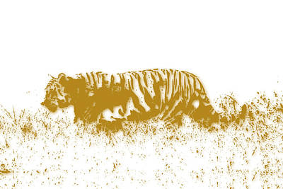 Tiger Art Print by Joe Hamilton