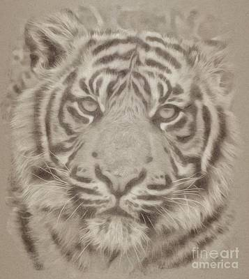 Animals Drawings - Tiger by Esoterica Art Agency
