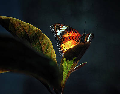 Photograph - Leopard Lacewing Butterfly In A Sunbeam by Bill Swartwout Fine Art Photography