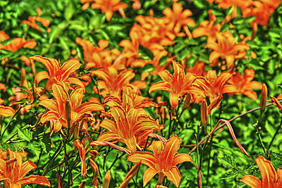 Tiger Lilies Art Print by Pat Cook