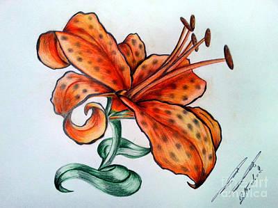 Animals Drawings - Tiger-lily by Balazs Sebok