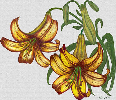 Digital Art - Tiger Lily Blossom  by Walter Colvin