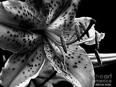 Photograph - Tiger Lily by Elfriede Fulda