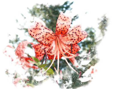 Photograph - Tiger Lily by Michele A Loftus