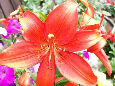 Art Print featuring the photograph Tiger Lily by Sharon Duguay