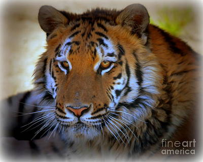 Photograph - Tiger Lily by Tru Waters