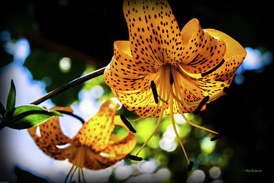 Photograph - Tiger Lily Twins by Mick Anderson
