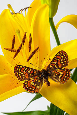 Stamen Photograph - Tiger Lily With Butterfly by Garry Gay