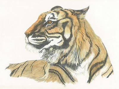 Tiger Art Print by Liz Rose