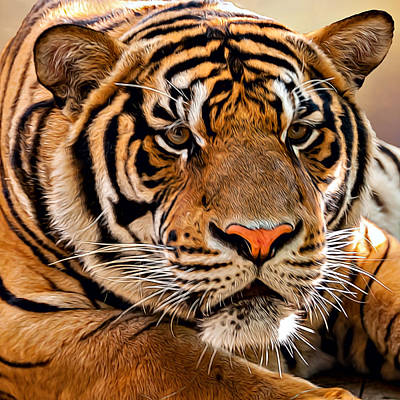 Photograph - Tiger by Maria Coulson