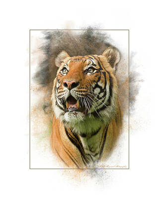Photograph - Tiger by Marty Maynard