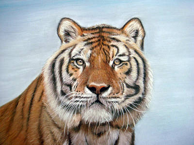 Drawing - Tiger by Mary Mayes