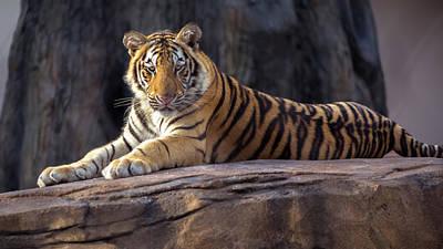 Tiger Mascot Art Print