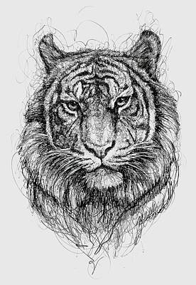 Animals Drawings - Tiger by Michael Volpicelli