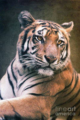 Mixed Media - Tiger No 6 by Angela Doelling AD DESIGN Photo and PhotoArt
