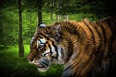 Photograph - Tiger On The Prowl by Randall Nyhof