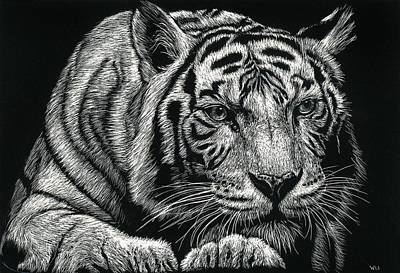 Drawing - Tiger Pause by William Underwood