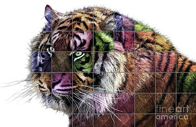 Kingfisher Digital Art - Tiger Pop Art by Mary Bassett