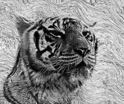 Digital Art - Tiger Portrait by Allen Beilschmidt