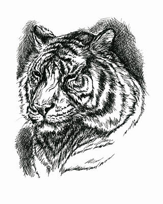Drawing - Tiger Portrait In Ink by MM Anderson