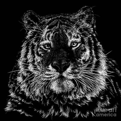 Wall Art - Drawing - Tiger Portrait by Laurie Musser