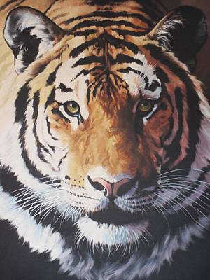 Painting - Tiger Portrait by Vivien Rhyan