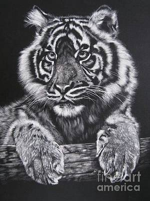 Scratchboard Painting - Tiger by Sabine Lackner