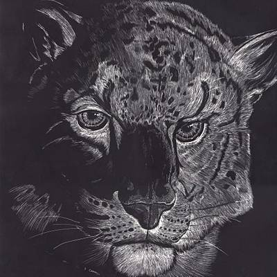 Digital Art - Tiger Scratch Board by Darren Cannell