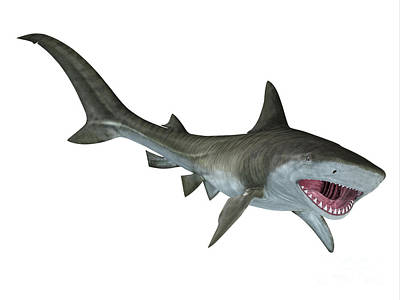 Tiger Shark Jaws Art Print by Corey Ford