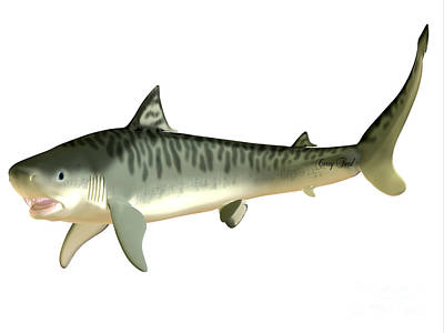 Sharks Painting - Tiger Shark Side Profile by Corey Ford