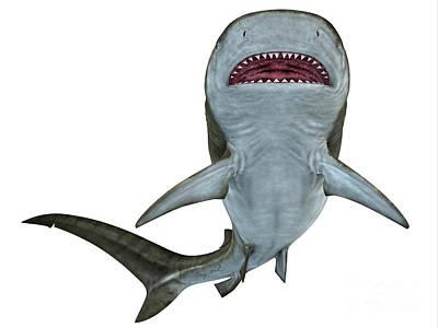 Tiger Shark Underside Art Print by Corey Ford