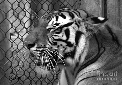 Photograph - Tiger Smile by Kami Catherman