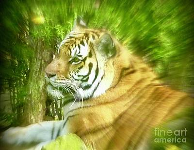 Photograph - Amur Tiger  by Susan Garren