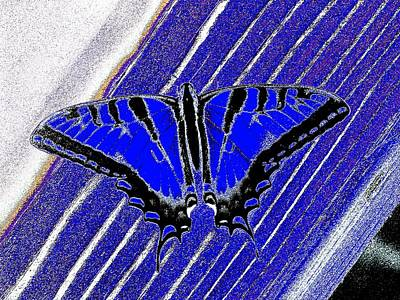 Blue Swallowtail Mixed Media - Tiger Swallowtail Blues by Owl's View Studio