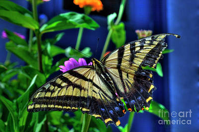 Photograph - Tiger Swallowtail Buterfly by Tony Baca