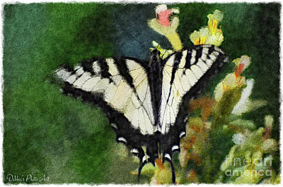 Photograph -  Tiger Swallowtail Butterfly 3 by Debbie Portwood